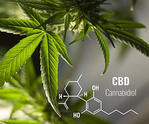 cbd - The Cure-All Remedy? Seven Diseases That CBD Can Help To Treat